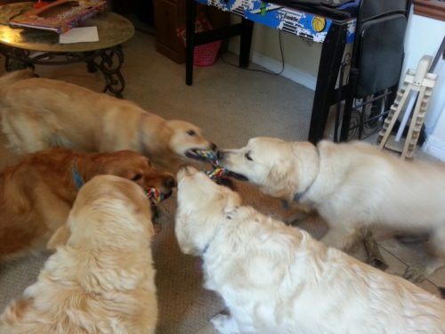 5-way-tug-of-war