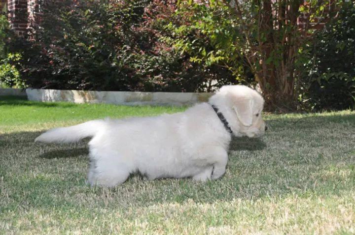 puppy-point